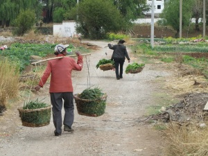 Lijiang Farmers Poverty